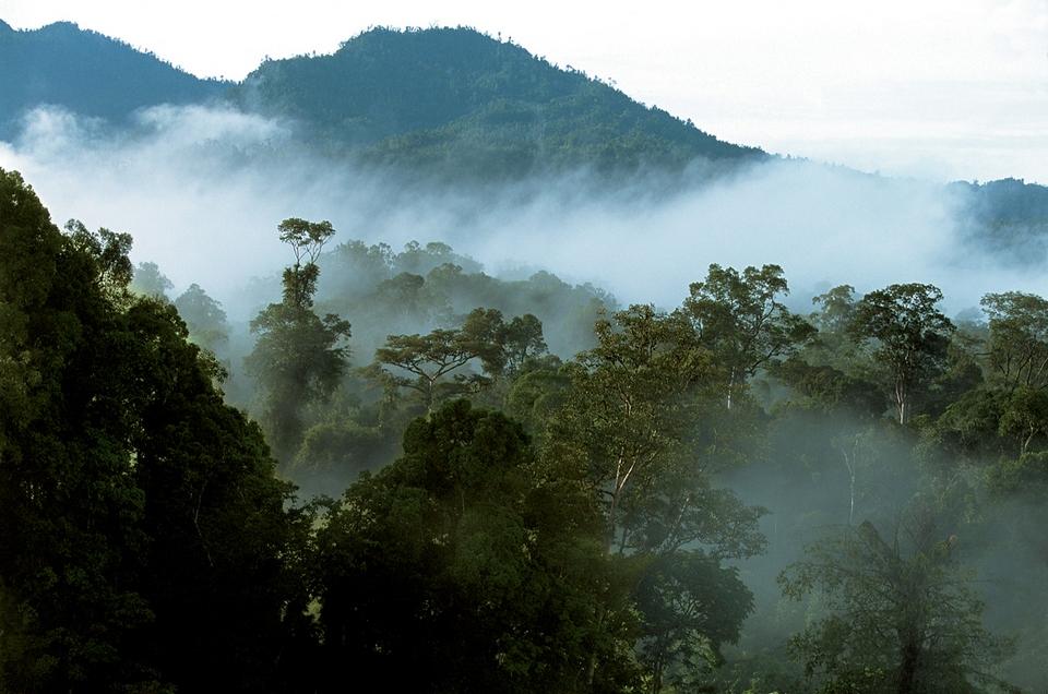 Остров Калимантан Борнео