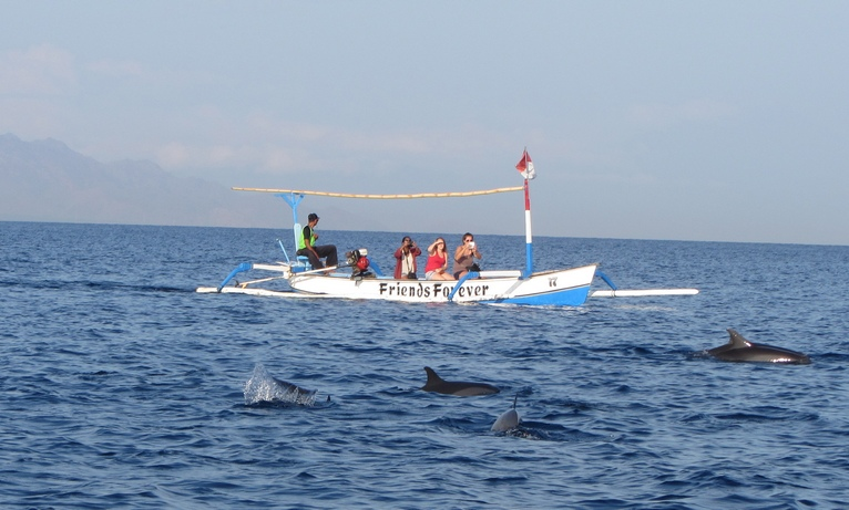 смотреть дельфинов в Ловине